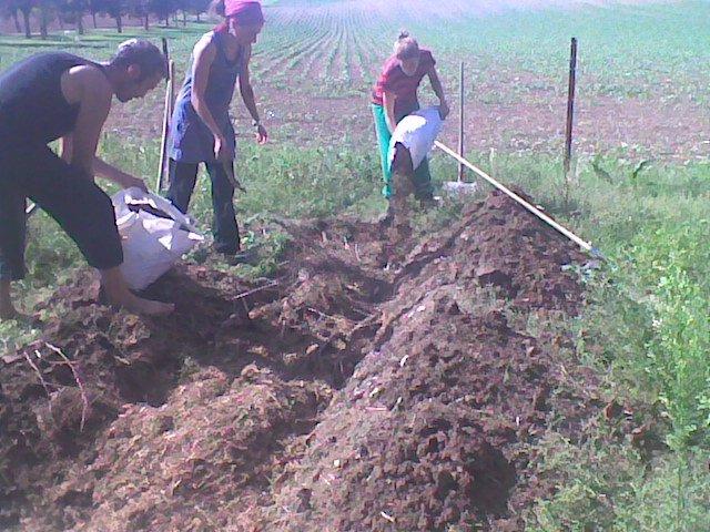 Recette d une butte de permaculture incroyables for Creer une butte permaculture